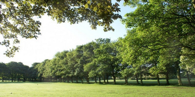 Photo of Woodhouse Moor park, green grass and row of trees