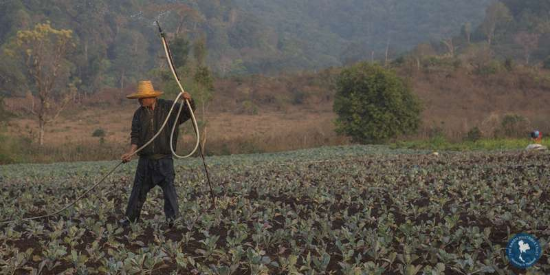 Man farming in Thailand, image courtesy of Karen Hilltribes Trust